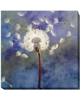 "Artistic Home Gallery 'Dandelion' Photographic Print on Wrapped Canvas 606EG Size: 36"" H x 36"" W x 1.5"" D"