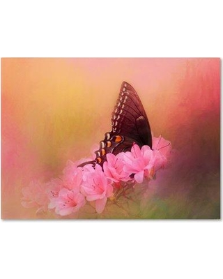 "Trademark Fine Art 'Napping in the Azaleas' Graphic Art Print on Wrapped Canvas ALI14460-C Size: 18"" H x 24"" W"