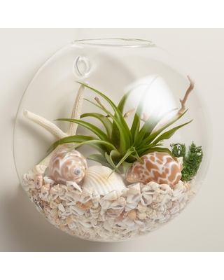 Wall-Mounted Live Plant Glass Terrarium by World Market