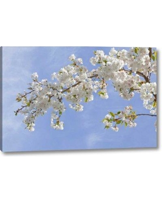 "World Menagerie 'Washington Seabeck Cherry Blossoms' Photographic Print on Wrapped Canvas BF152773 Size: 10"" H x 16"" W x 1.5"" D"