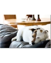 """Trademark Art """"Jack Russel"""" by Gifty Idea Greeting Cards and Such Photographic Print on Wrapped Canvas KC005-C1624GG"""