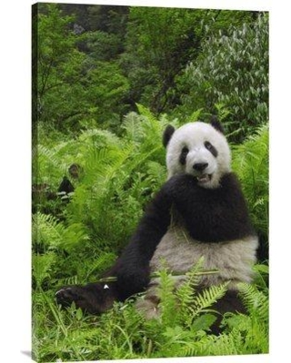 """East Urban Home 'Giant Panda Eating Bamboo Wolong Nature Reserve China' Photographic Print EAAC7122 Format: Wrapped Canvas Size: 30"""" H x 20"""" W"""