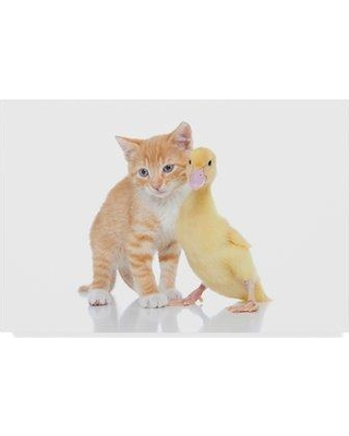 """Trademark Art 'Kitten and Duck' Photographic Print on Wrapped Canvas ALI24515-CGG Size: 30"""" H x 47"""" W"""