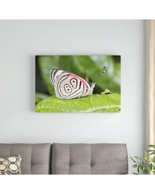 Amazing Deal On East Urban Home Eighty Nine Butterfly Photographic Print On Canvas Canvas Fabric In Brown Green Size 12 H X 18 W X 1 5 D Wayfair
