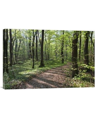 """East Urban Home 'Trail Through Deciduous Forest in Spring Upper Bavaria Germany' Photographic Print EAAC8906 Size: 16"""" H x 24"""" W Format: Wrapped Canvas"""
