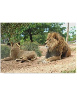 """Trademark Fine Art 'Lions in Sun' Photographic Print on Wrapped Canvas ALI36001-CGG Size: 12"""" H x 19"""" W x 2"""" D"""