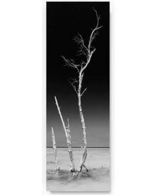 """Trademark Art 'Ocean Nature' Photographic Print on Wrapped Canvas PH01239-C Size: 19"""" H x 6"""" W"""