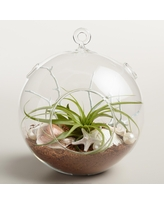 Check Out Sales For Terrariums Real Simple
