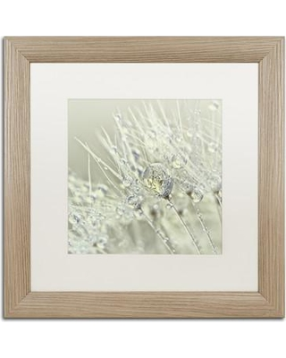 "House of Hampton 'Dandelion Dew III' Framed Photographic Print HOHP9824 Size: 16"" H x 16"" W x 0.5"" D Frame Color: Birch"
