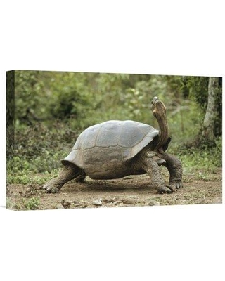"""East Urban Home 'Darwin's Finch and Volcan Alcedo Giant Tortoise Galapagos Islands' Photographic Print EAUB5704 Size: 12"""" H x 18"""" W Format: Wrapped Canvas"""