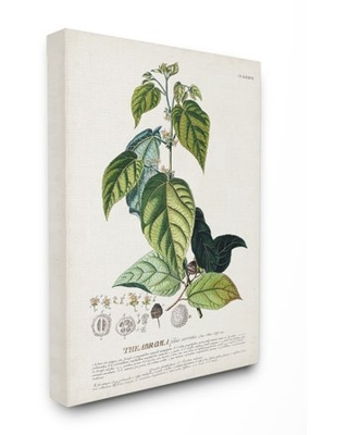 Stupell Industries Botanical Plant Illustration Seeds And Leaves Vintage Design Canvas Wall Art by Unknown