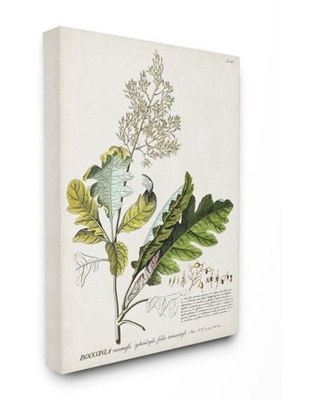 Stupell Industries Botanical Plant Illustration Leaves Vintage Design Canvas Wall Art by Unknown