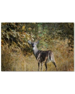 "Trademark Fine Art 'Buck in Autumn' Graphic Art Print on Wrapped Canvas ALI13819-C Size: 12"" H x 19"" W"
