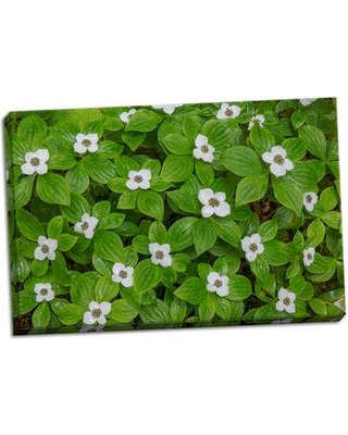 Ebern Designs 'Bunchberry' Photographic Print on Wrapped Canvas BF053102