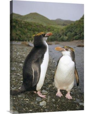"""East Urban Home 'Royal Penguin Pair on Landing Beach Sandy Bay Macquarie Island' Photographic Print EAAC8751 Size: 30"""" H x 20"""" W Format: Wrapped Canvas"""