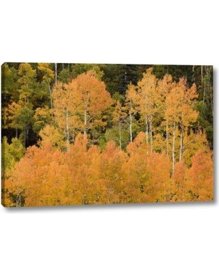 """Millwood Pines 'Co Uncompahgre Nf Grove of Orange-Tinged Aspens' Photographic Print on Wrapped Canvas BF152491 Size: 10"""" H x 16"""" W x 1.5"""" D"""