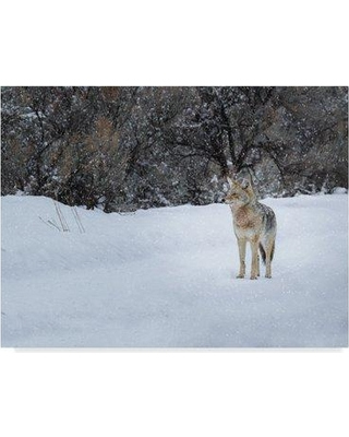 """Trademark Art 'The Winter Coyote' Photographic Print on Wrapped Canvas ALI34902-CGG Size: 24"""" H x 32"""" W x 2"""" D"""