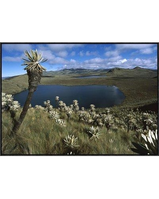 "East Urban Home 'Frailejones Growing in Paramo Del Angel Northern Andes Ecuador' Photographic Print EAUB5033 Size: 24"" H x 36"" W Format: Black Framed"