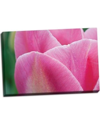 Ophelia & Co. 'Pink Tulip II' Photographic Print on Wrapped Canvas BF052279