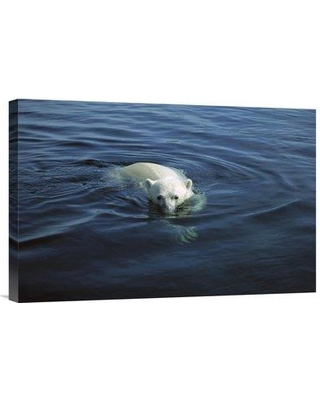 """East Urban Home 'Polar Bear Swimming Wager Bay Canada' Photographic Print EAAC8952 Size: 16"""" H x 24"""" W Format: Wrapped Canvas"""