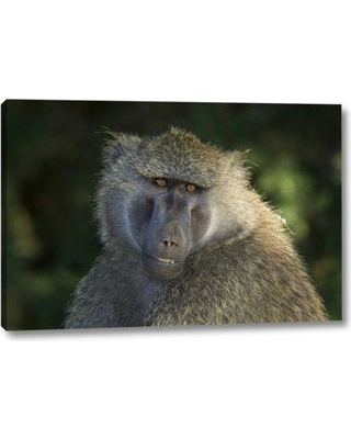 "World Menagerie 'Kenya Samburu National Reserveolive Baboon' Photographic Print on Wrapped Canvas BF152725 Size: 16"" H x 24"" W x 1.5"" D"