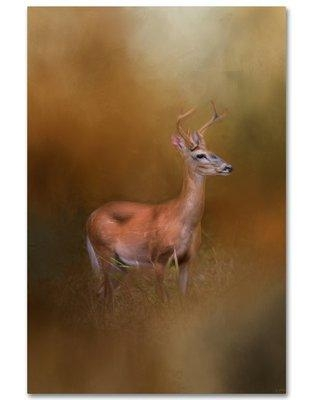 "Trademark Fine Art 'Buck in the Woods' Graphic Art Print on Wrapped Canvas ALI14598-C Size: 24"" H x 16"" W"