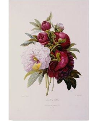 """Trademark Art 'Peonies' Graphic Art Print on Wrapped Canvas BL01749-CGG Size: 19"""" H x 12"""" W x 2"""" D"""