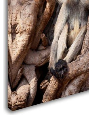 "Trademark Fine Art 'Monkeys' Photographic Print on Wrapped Canvas ALI19450-C Size: 19"" H x 12"" W"