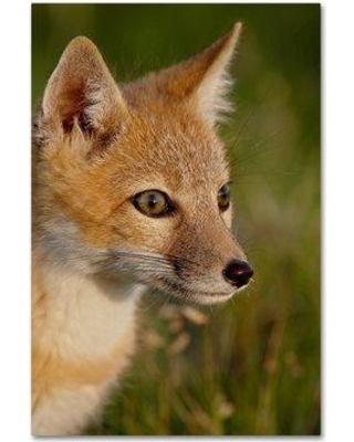 """Trademark Art 'Fox' Photographic Print on Wrapped Canvas ALI19179-C Size: 24"""" H x 16"""" W"""