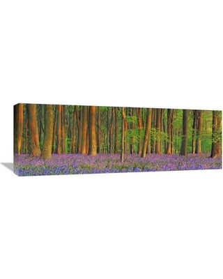Global Gallery 'Beech Forest with Bluebells Hampshire England' by Frank Krahmer Photographic Print on Wrapped Canvas GCS-463700-1236-142