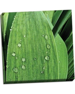 """Ebern Designs 'Nature Up-Close III' Photographic Print BF114243 Size: 16"""" H x 16"""" W x 0.75"""" D Format: Wrapped Canvas"""