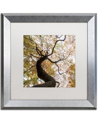 """Alcott Hill 'Under a Japanese Maple 2' Silver Framed Photographic Print ACOT7072 Size: 16"""" H x 16"""" W x 0.5"""" D"""