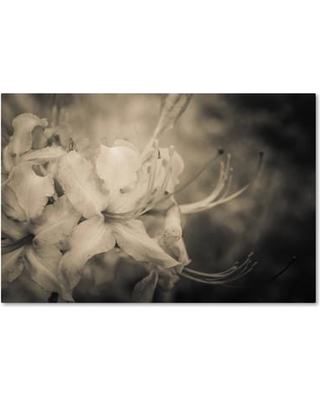 """Trademark Fine Art Sepia Aged Rhododendron Blooms Photographic Print on Wrapped Canvas MFG0048-C Size: 22"""" H x 32"""" W x 2"""" D"""