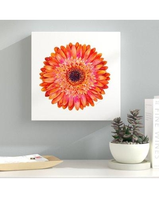 "Latitude Run Orange Gerbera Daisy Painting Print on Wrapped Canvas LTRN7653 Size: 24"" H x 24"" W x 2"" D"