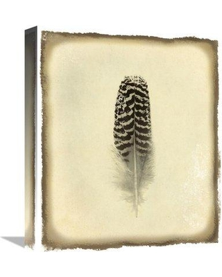 """East Urban Home 'Feather I Vintage' Photographic Print on Canvas ESUN1260 Size: 36"""" H x 30.24"""" W"""