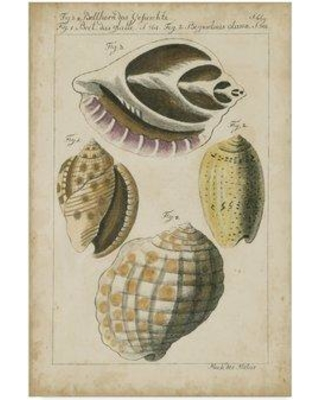 """Highland Dunes 'Vintage Shell Study I' Acrylic Painting Print on Wrapped Canvas HGLN1934 Size: 47"""" H x 30"""" W x 2"""" D"""