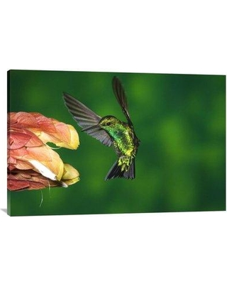 """East Urban Home 'Western Emerald Hummingbird Feeding on Flower Andes Ecuador' Photographic Print EAAC8662 Size: 24"""" H x 36"""" W Format: Wrapped Canvas"""
