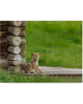 "Trademark Art 'Coyote Pup on Log Cabin Porch' Photographic Print on Wrapped Canvas ALI34903-CGG Size: 35"" H x 47"" W x 2"" D"
