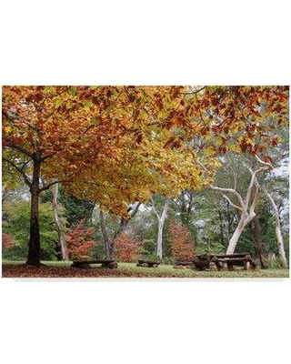 """Trademark Art 'Autumn Landscape Forest' Photographic Print on Wrapped Canvas ALI35962-CGG Size: 16"""" H x 24"""" W x 2"""" D"""