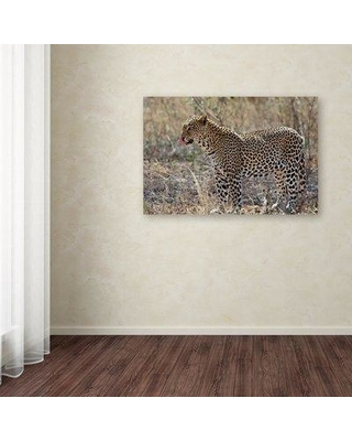 "Trademark Art 'Cheetah' Photographic Print on Wrapped Canvas ALI19053-C Size: 16"" H x 24"" W"