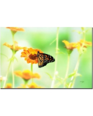 Trademark Art Farewell By Lois Bryan Photographic Print On Canvas Lbr076 C1624gg
