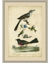 GlobalDesigns Wilson's Mockingbird Framed Painting Print GBL65974