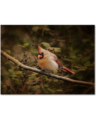 """Trademark Art 'Anticipating Winter Cardinal 2' Graphic Art Print on Wrapped Canvas ALI13781-C Size: 14"""" H x 19"""" W"""