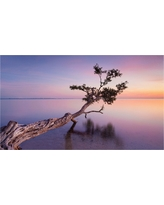 'Water Tree Xv' by Moises Levy Ready to Hang Canvas Wall Art, Multi-Colored