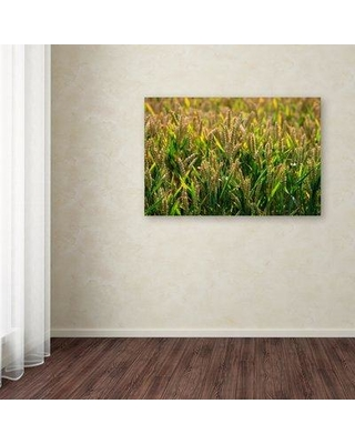 """Trademark Art 'Wheat' Photographic Print on Wrapped Canvas ALI18687-C Size: 16"""" H x 24"""" W"""
