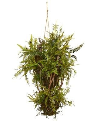 Bungalow Rose Mixed Forest and Hanging Foliage and Fern Plant W001411836