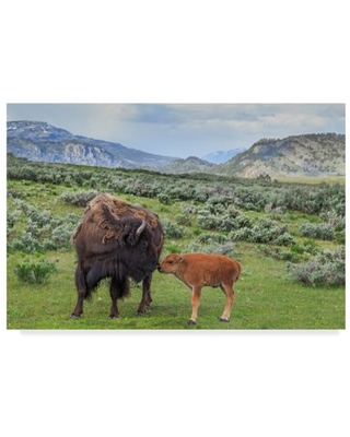 Trademark Fine Art 'Bison And Calf' Canvas Art by Galloimages Online