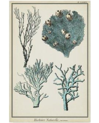"""Highland Dunes 'Coral Species II' Graphic Art Print on Wrapped Canvas HGLN2303 Size: 24"""" H x 16"""" W x 2"""" D"""