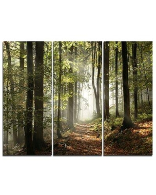 Design Art Green Fall Forest with Sun Rays - 3 Piece Photographic Print on Wrapped Canvas Set PT9742-3P