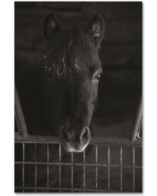 """Trademark Fine Art 'Hay in my Hair' Photographic Print on Wrapped Canvas TS00020-C Size: 47"""" H x 30"""" W"""